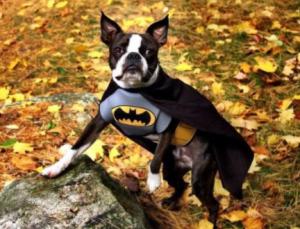 Difraz batman perro