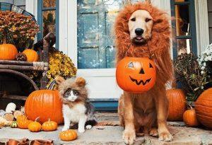 Disfraz de leon para perros
