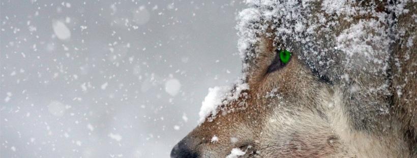 Mascotas en invierno