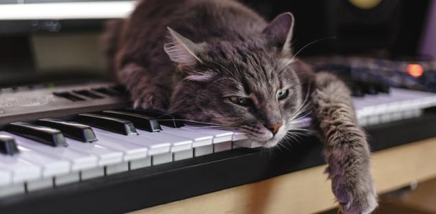 Gatos día de la música