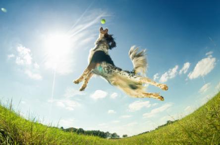 Hacer deporte con tu mascota amiga