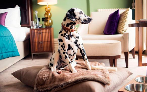 Hoteles Pet Friendly