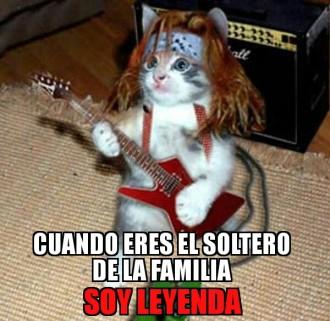 Meme de gatos