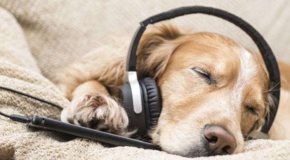 Perros día de la música