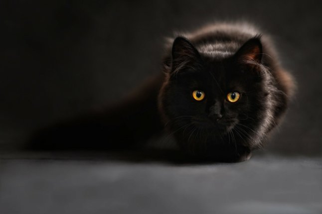 Creencia de gatos con 7 vidas