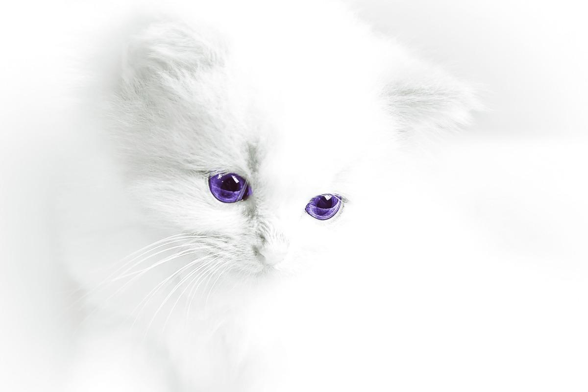 ¿Cómo cuidar a un gato albino?