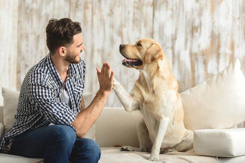 Cuidadores de perros