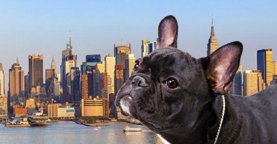 Dog New York City