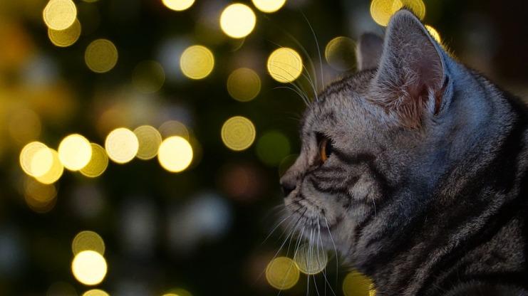 gatos petardos