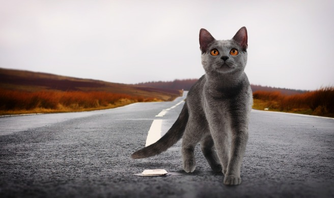 gatos siete vidas