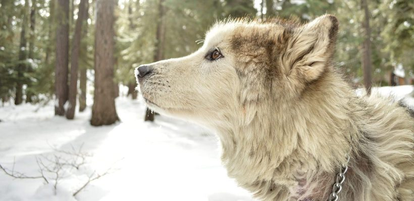 Consejos perro nieve