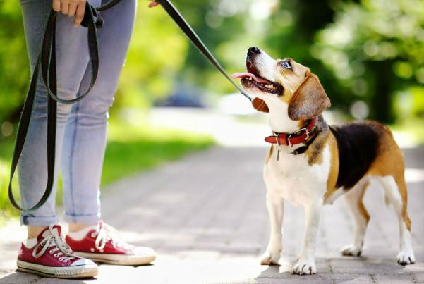 paseador perro