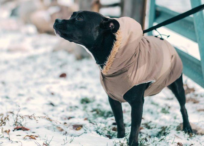 Perro nieve abrigo