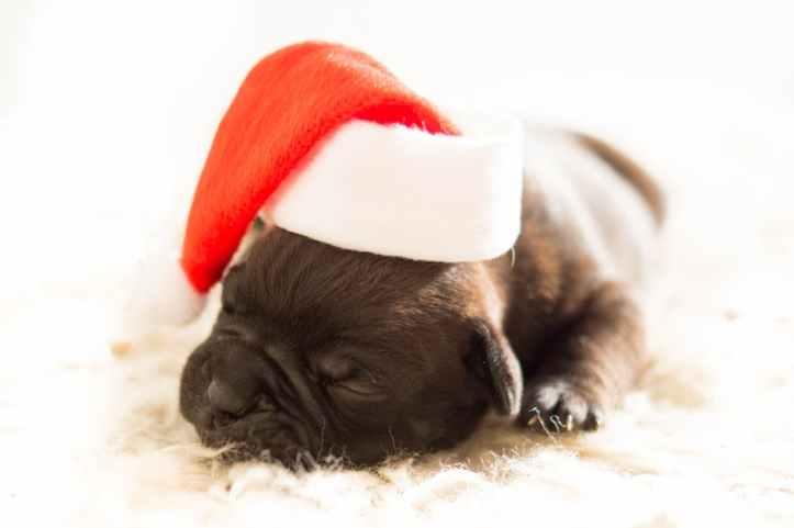 perro regalo navidad
