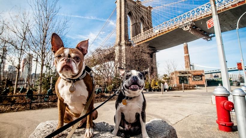 Perros en nueva york