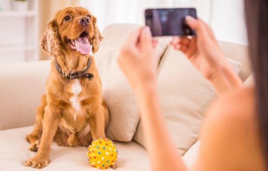 Perros fotos