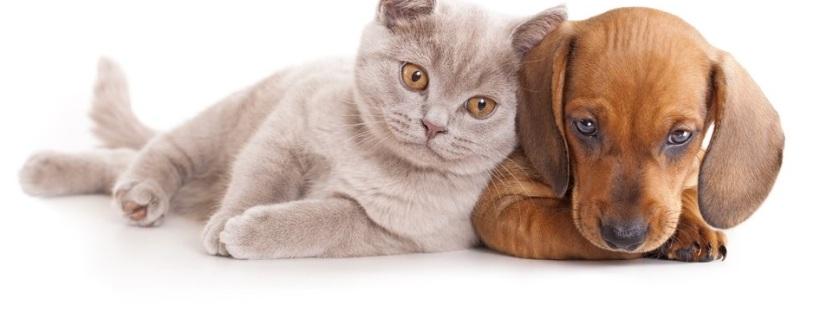 Perros y gato