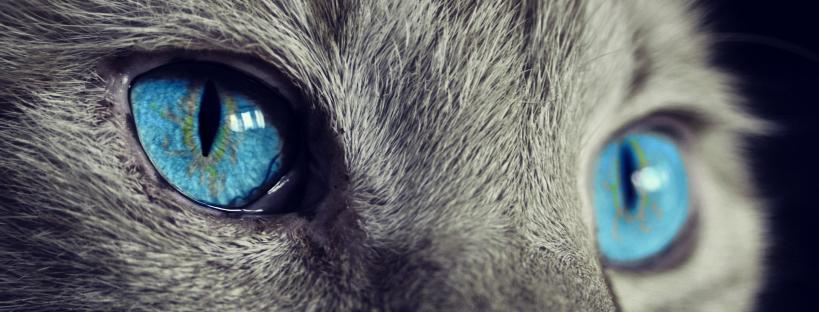 por que los gatos tienen 7 vidas