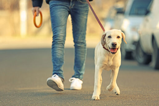 caminar con perro