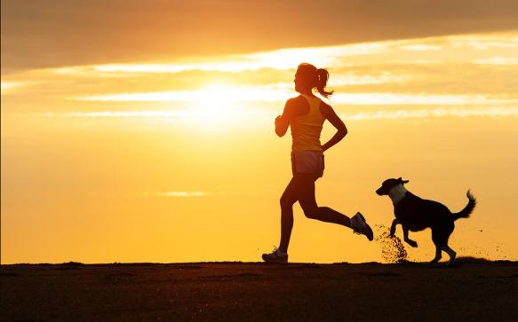 ejercicio perros