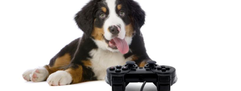 video juegos animales