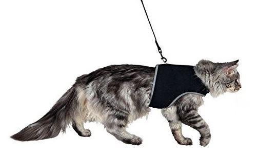 correa y arnes de gato