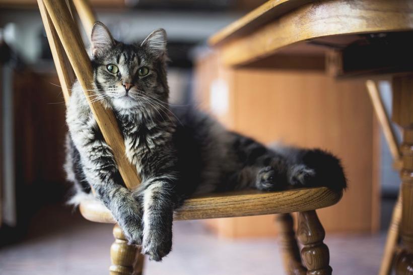 evitar gato arañe los muebles
