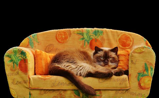 evitar gato arañe muebles