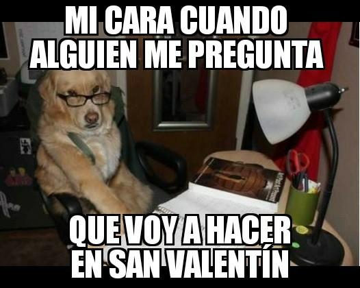 mejores memes de animales perro valentin