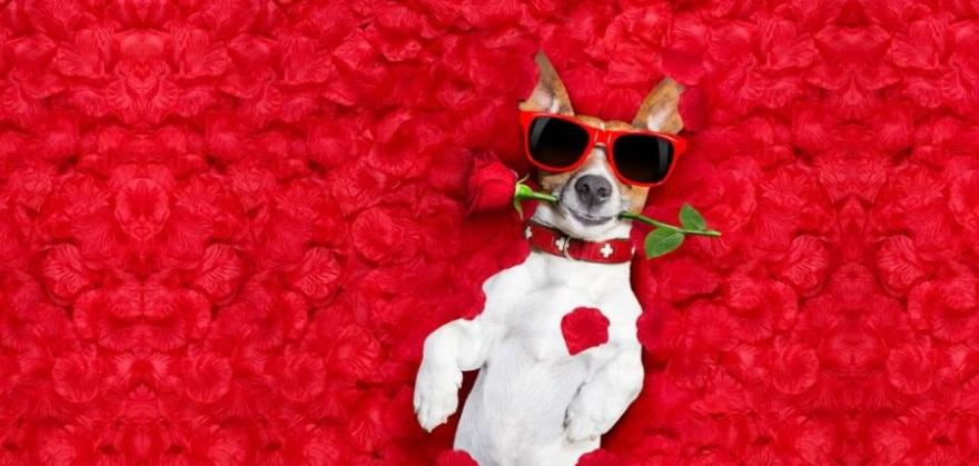 mejores memes de animales en san valentin