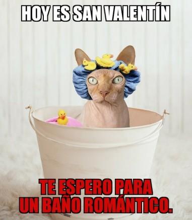memes de animales baño