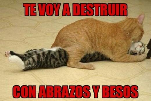 memes de animales gatos