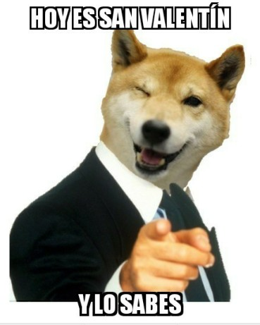 Memes de animales perro
