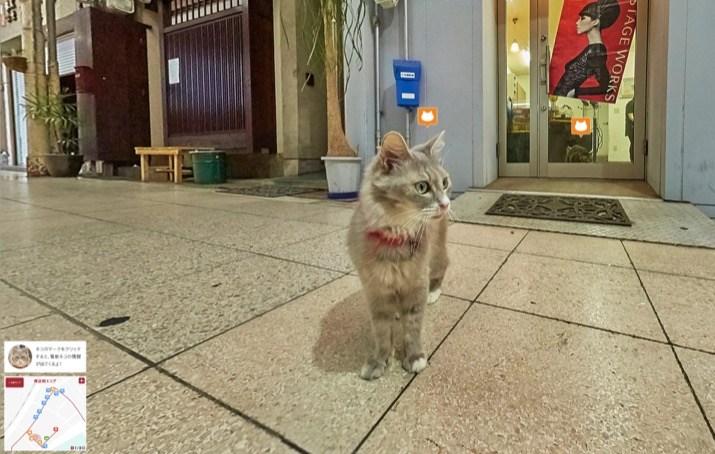 gato street view