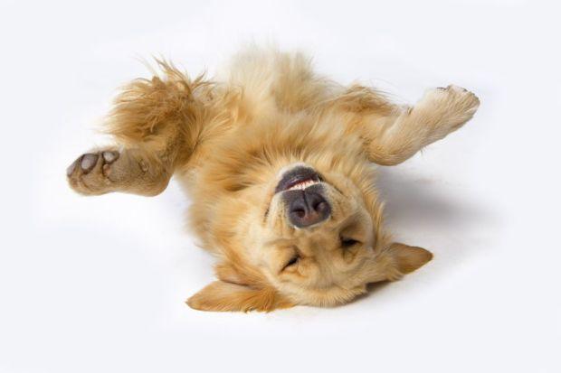 perro haciendose el muerto