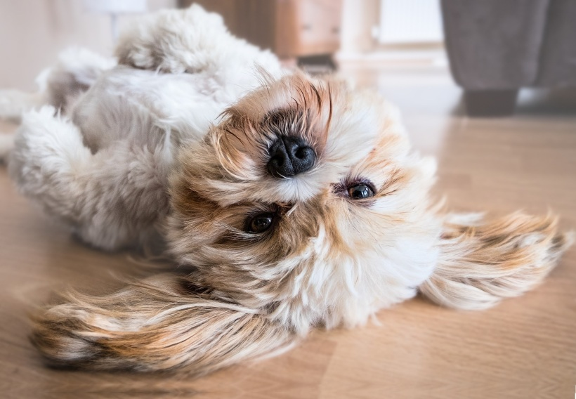 perro truco muerto