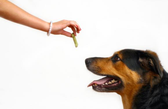 premio perro