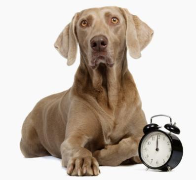 tiempo perro