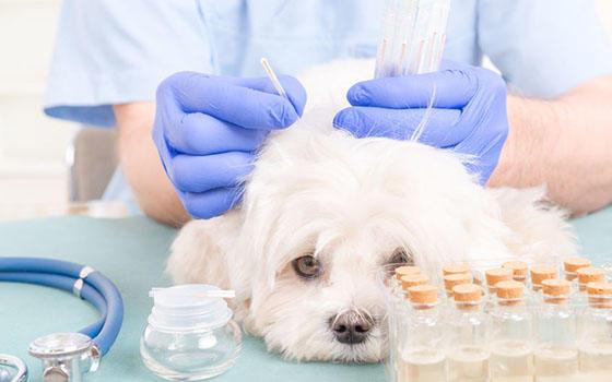 acupuntura animales