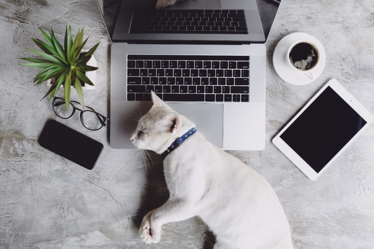 Lleva al día sus cuidados con la app para mascotas 11 Pets,
