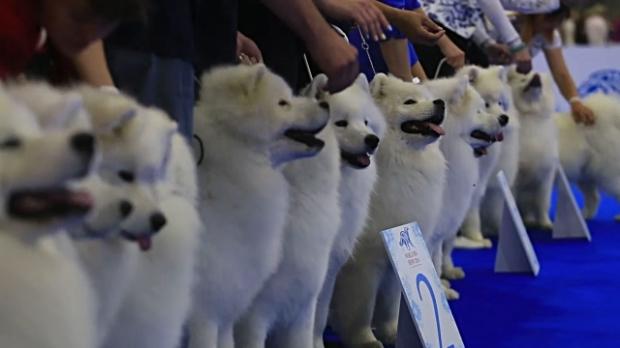 concurso de belleza para perros