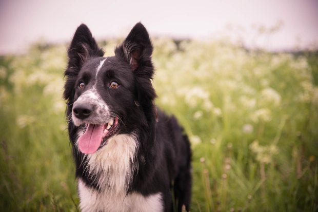 homeopatia animales perro