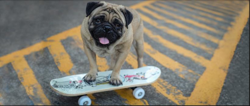 montar perro patinete
