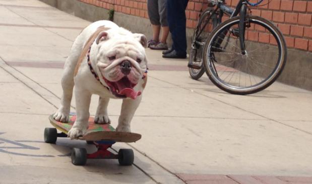 perro montando en monopatin