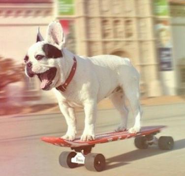 perro montando en skate