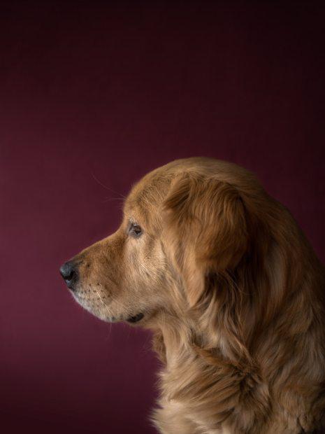 perros huelen el miedo
