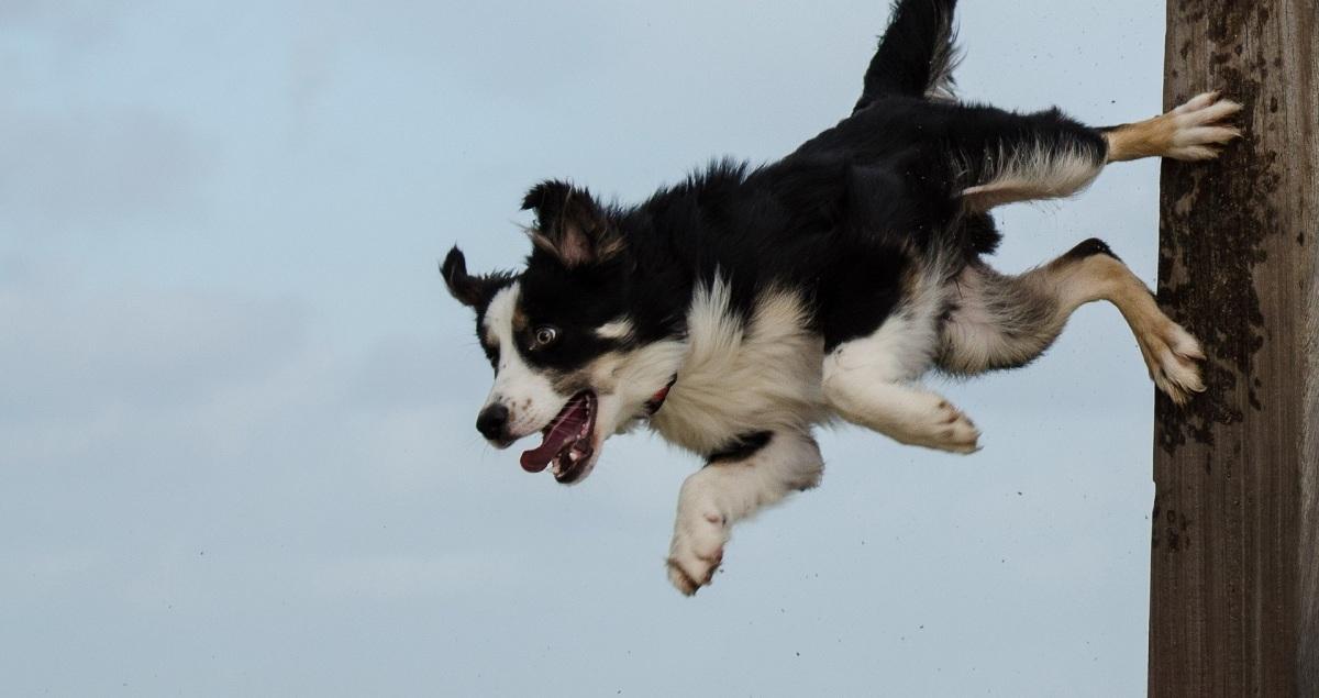 Enseña los mejores trucos a tu perro con la app Dogo