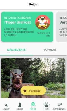 Retos Dogo trucos para perros