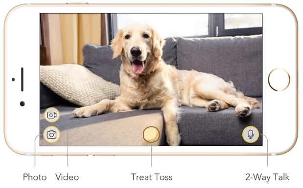 Aplicacion camara para perros furbo