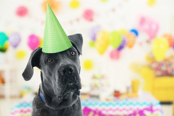 cumpleaños de perros